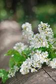 White spring flowers — Stock Photo