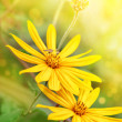 Yellow flowers with flying bee — Stock Photo