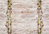 Easter decoration with catkins on old wood — Stock Photo