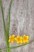 Yellow flower and green grass on the old wood  — Stock Photo