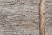 Dry branch on the old wood — Stock Photo