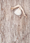 Seashell and dry branch on the old wood — Stock Photo