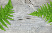 Fern leaf on the old wood — Stock Photo