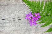 Fern leaf and violet flowers on the old wood — Stock Photo