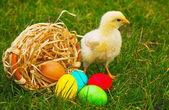 カラフルなイースターエッグの小さな赤ちゃん鶏 — ストック写真