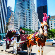 Horse carriage at the Central park in New York City — Stock Photo