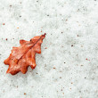 Fallen red oak leaf on a durty snow — Stock Photo