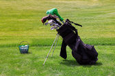Professional golf equipment on the golf course — Stok fotoğraf