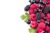 Fresh berries: raspberries, blackcurrants — Stockfoto