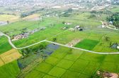 Landscape of rice farm — Foto de Stock