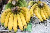 Gros Michel banana — Stock Photo