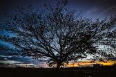 Big tree under sunset — Stock Photo