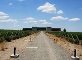 Mendoza vineyard — Stock Photo