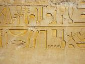 エジプトのヒエログリフ — ストック写真