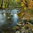 Stock Photo: River in Autumn Forest