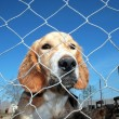 Captured dog — Stock Photo