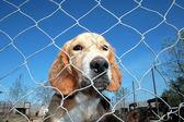 Captured dog — Stock Photo