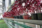 Flowers nursery — Stock Photo