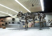 Senckenberg Naturmuseum Frankfurt — Stock Photo