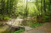 Puente río y madera — Foto de Stock