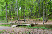 Wooden bridge at Forest — Foto Stock