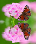 Little pink flower and butterfly — Stock Photo
