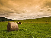 Hay bales on field background — Stock Photo