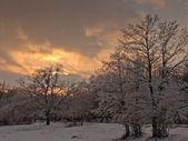 Winter background — Stockfoto