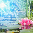 Water lily — Stock Photo #25705681