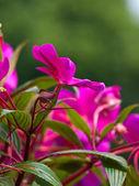 Mooie roze bloem — Stockfoto