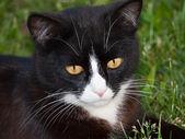 Black cat portrait — Stock Photo