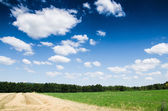 Green field background — Stock Photo