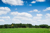 Green field background — Stock Photo