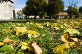 Sonbahar park renkli yeşillik — Stok fotoğraf