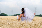 Bride in a wheat land — Stock Photo