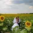 Wedding couple in sunflower field — Stock Photo