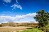 Brown field and blue sky — Stock Photo