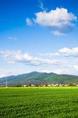 Green field — Стоковое фото