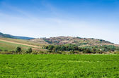 Green field at sunny day — Stock Photo