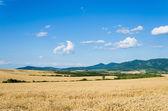 Wheat land — Stock Photo