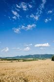 Tarwe land — Stockfoto