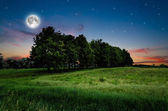 Night sky and trees background — Stock Photo
