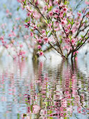 Tree branch reflection in water — Stock Photo
