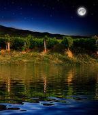 Grape field in the night — Stock Photo