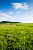 Campo verde — Foto Stock