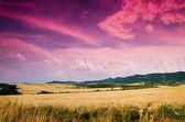 Wheat in the night — Stock Photo