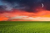 зеленое поле в ночи — Стоковое фото