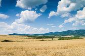 Wheat land background — Stock Photo