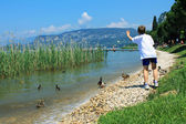 Boy feeding ducks — Stock Photo