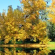 Autumn tree with yellow leaves on a lake — Stock Photo